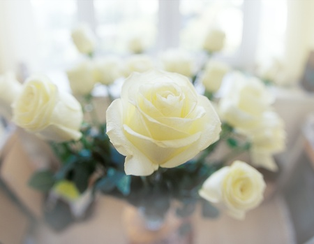 Beautiful white roses. Please see some similar images in my portfolio. Stock Photo - 8409417