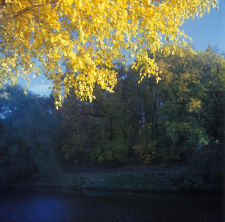 Yellow leaves on a birch branch with pond in background. High resolution image. photo