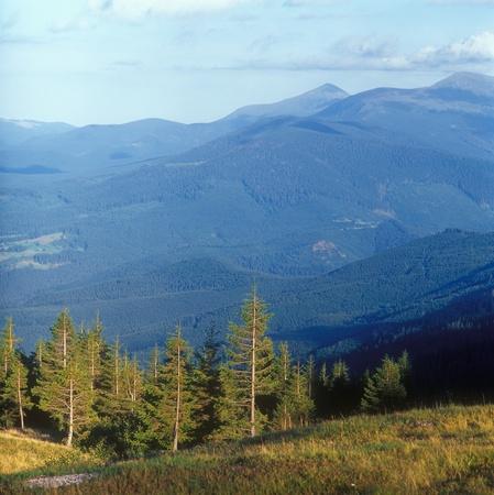 Fir trees in mountains at sunset. Carpathian mountain range, Ukraine. photo