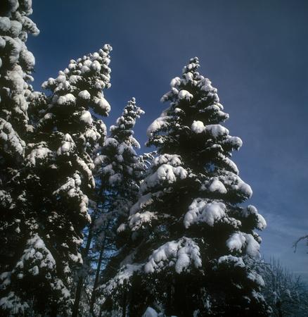 Beautiful winter landscape. photo