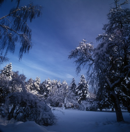 Winter landscape in the moonlight.