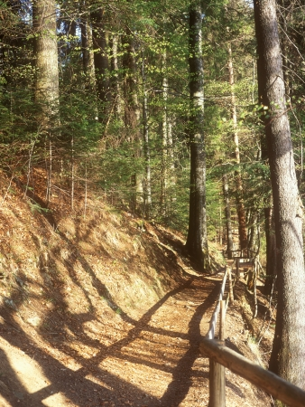 pedestrian walkway: The pedestrian walkway in the mountain forest at sunny day