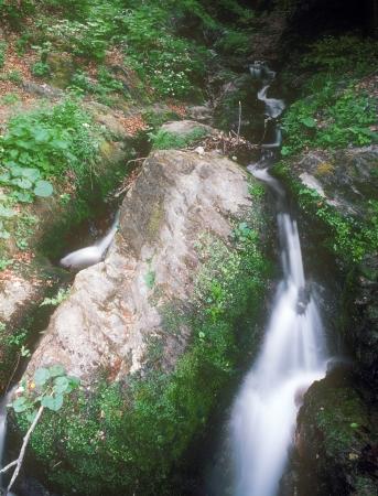 streamlet: Wild mountain streamlet taken with long exposure