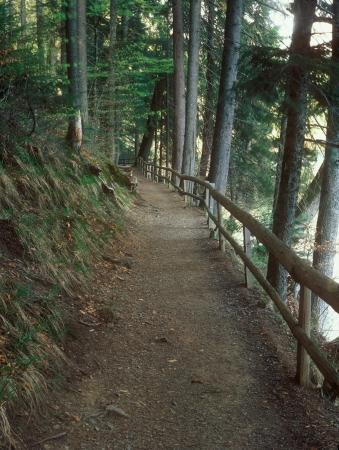 pedestrian walkway: The pedestrian walkway in the mountain forest  Stock Photo