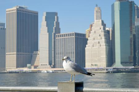 Seagull against a Manhattan skyline at sunny day.