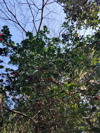 Low angle of tree with green leaves and red flowers in South Korea 写真素材