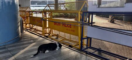 A street dog is waiting for humans and passengers to give him treats and hugs from behind the police barricades put on Terminal 3 during corona virus pandemic in Indira Gandhi International Airport in Delhi