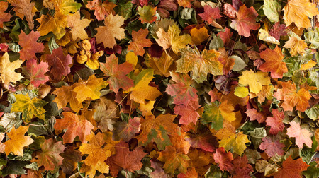 Colorful background of fallen autumn leaves 스톡 콘텐츠