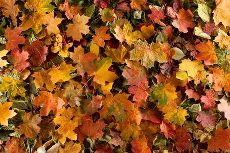 Colorful background of autumn leaves