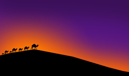 hump: Camels in desert in a light of sunset