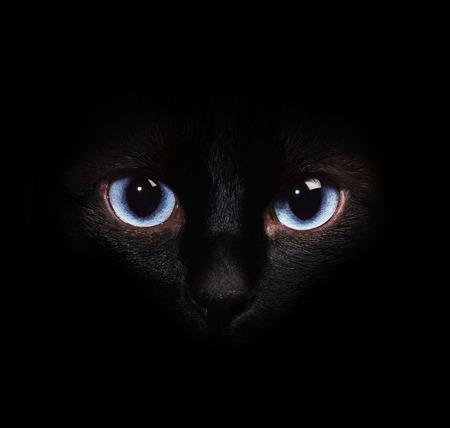 暗闇の中でシャム猫の目 写真素材