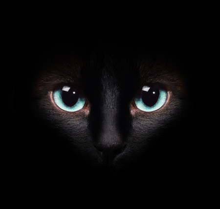 cheshire cat: Eyes of the siamese cat in the darkness