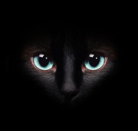 ojos negros: Ojos del gato siamés en la oscuridad Foto de archivo