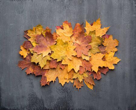 Sfondo autunnale stagionale. Cornice di foglie d'acero colorate su grigio.