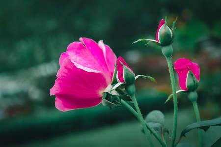 Flower in the garden Banco de Imagens