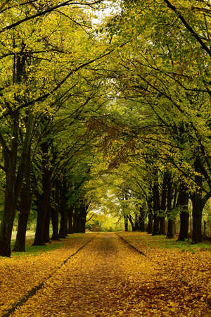 Alley covered with leaves in an autumn park. Bright autumn vertical background.