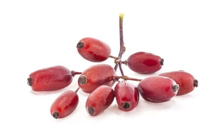 barberry: Barberry isolated on a white background
