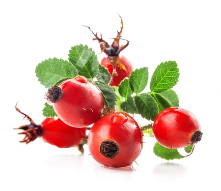 Rose hips isolated on a white background