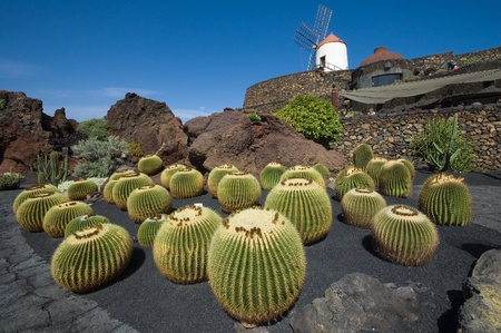 globular: View of cactus garden in Guatiza, Lanzarote, Canary Islands (Spain)