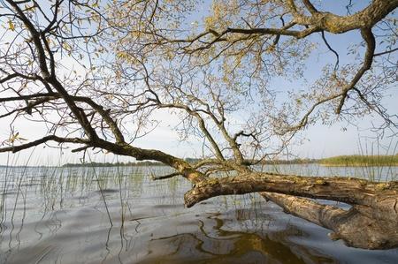 masuria: Tree on the edge of a lake, Masuria, Poland