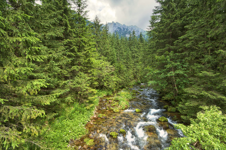 Rapid stream flowing through the mountain valley, Tatry, Poland photo