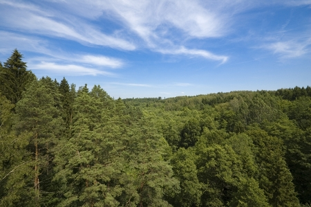 masuria: Top view of green forest against blue cloudy sky in Masuria District, Stanczyki, Poland Stock Photo