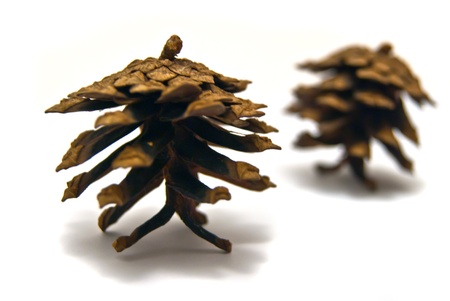 Two pinecones close-up on white background photo