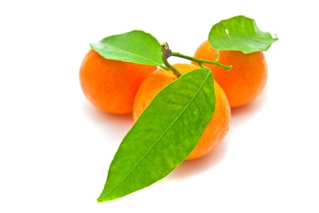 three tangerines on a branch on white background