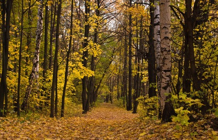 deserted path in the deciduous autumn forest Stock Photo