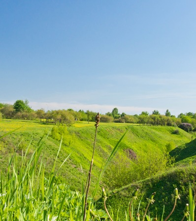 green ravine in the park on a sunny day Stock Photo