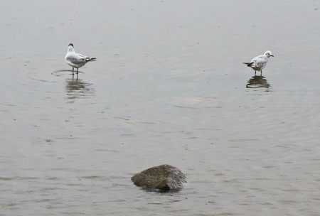 two birds on a rock in the water