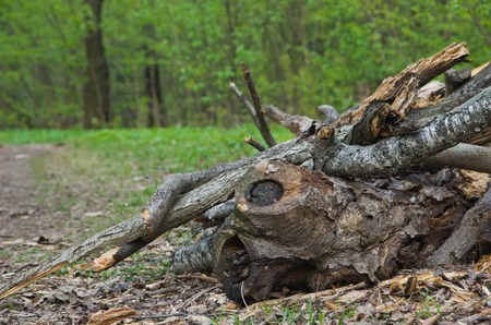 heap of firewood in the forest at summer day Stock Photo