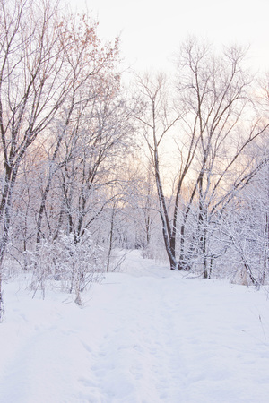 seasonally: snowy path through the trees in forest