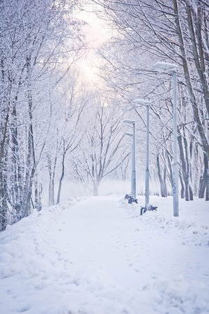seasonally: snowy path through the trees in winter forest