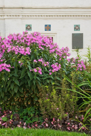 seasonally: flowers in the park next to the building wall Stock Photo