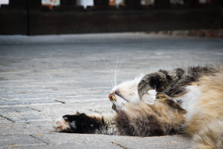 cat sleeps on a stone path in the park
