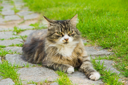 Cat on the stone path in the grass