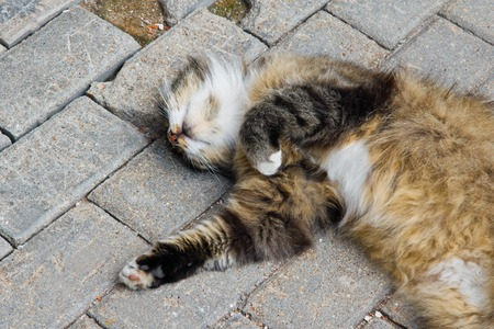 cat sleeps on stone path in the park