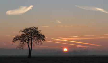 bos: solo boom met zonsopkomst