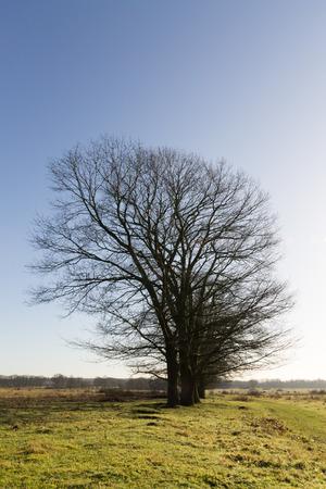 herfstbomen Tegen blauw lucht