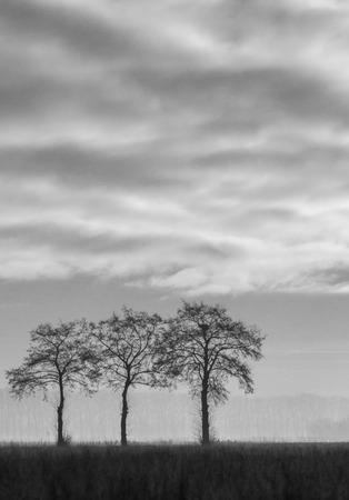 3 bomen in zwart wit