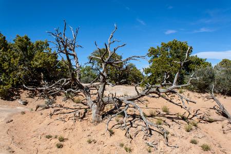 spellbinding: The old tree in the desert