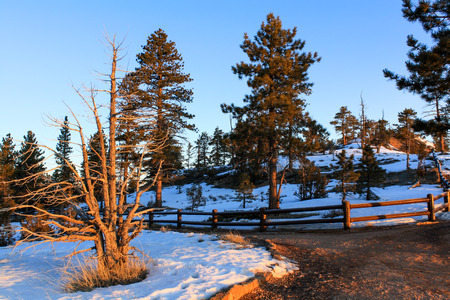 spellbinding: Dawn in the national park, path, trees and clear blue sky