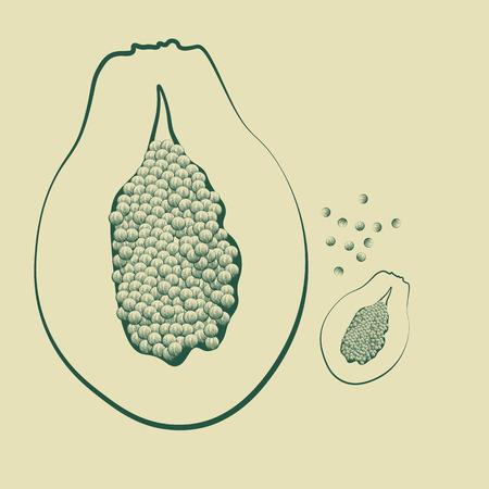 vector illustration of a papaya fruit with seeds vintage Ilustração