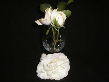 rose and glas