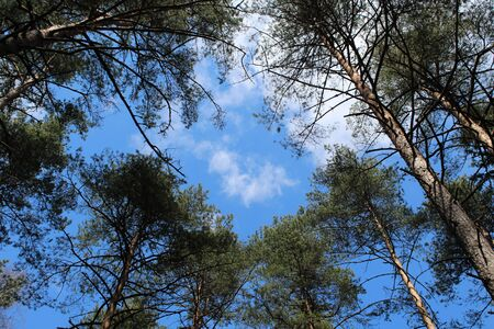 View of the sky with tree krones