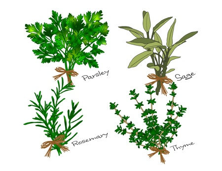 An illustration of bunches of the herbs referenced in the song Scarborough Fair, parsley, sage, rosemary and thyme