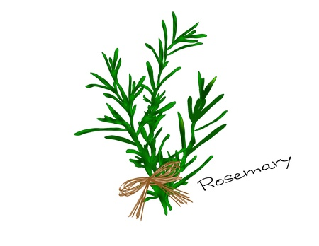An illustration of a bunch of bright green rosemary tied with a raffia bow  Stock Photo