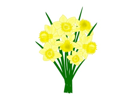 An illustration of a bouquet of daffodil flowers Stock Photo