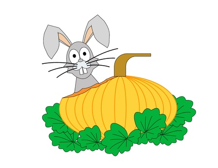 The head of a rabbit behind a partially eaten pumpkin Stock Photo